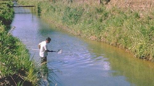 Kontroll schistosomiasis. Tömeges féregtelenítés - Mass deworming - vadhibiscus.hu