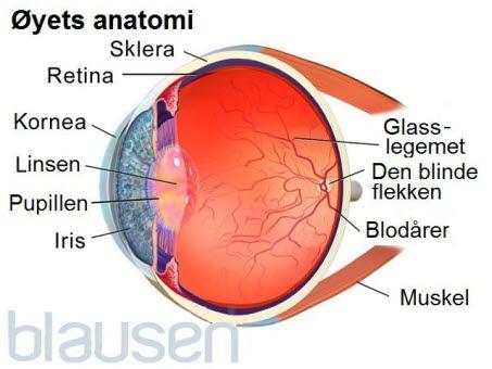 12451_9716_8257-2-eyeanatomy-01 speilet.jpg