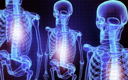 hvor mange bein i menneskekroppen