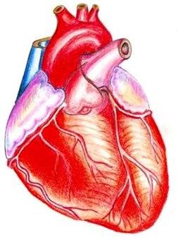 1018-2-hjerteinfarkt-bilde-2.jpg