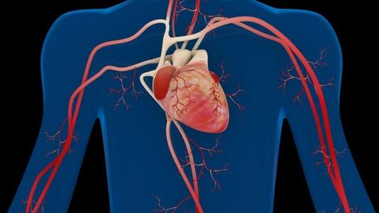 tette blodårer i magen