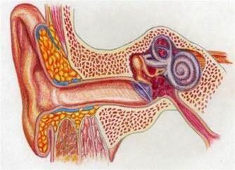 Akute Mittelohrentzündung, Flüssigkeit hinter dem Trommelfell.jpg