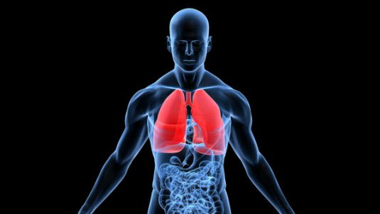 Die Lunge - Deximed