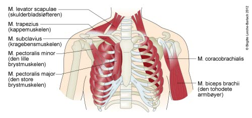 vondt i brystet og halsen