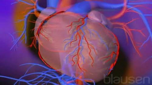 Hjerte med omgivende perikard