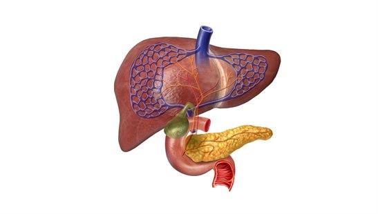 Bilderesultat for lever