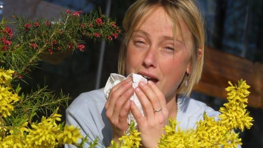 bli av med allergi